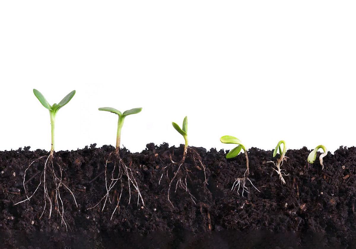 Kaip sudygsta augalo sėklos