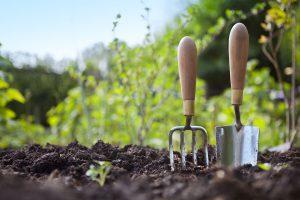Gegužės darbai sode