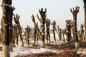 Kaip išsaugoti medžius