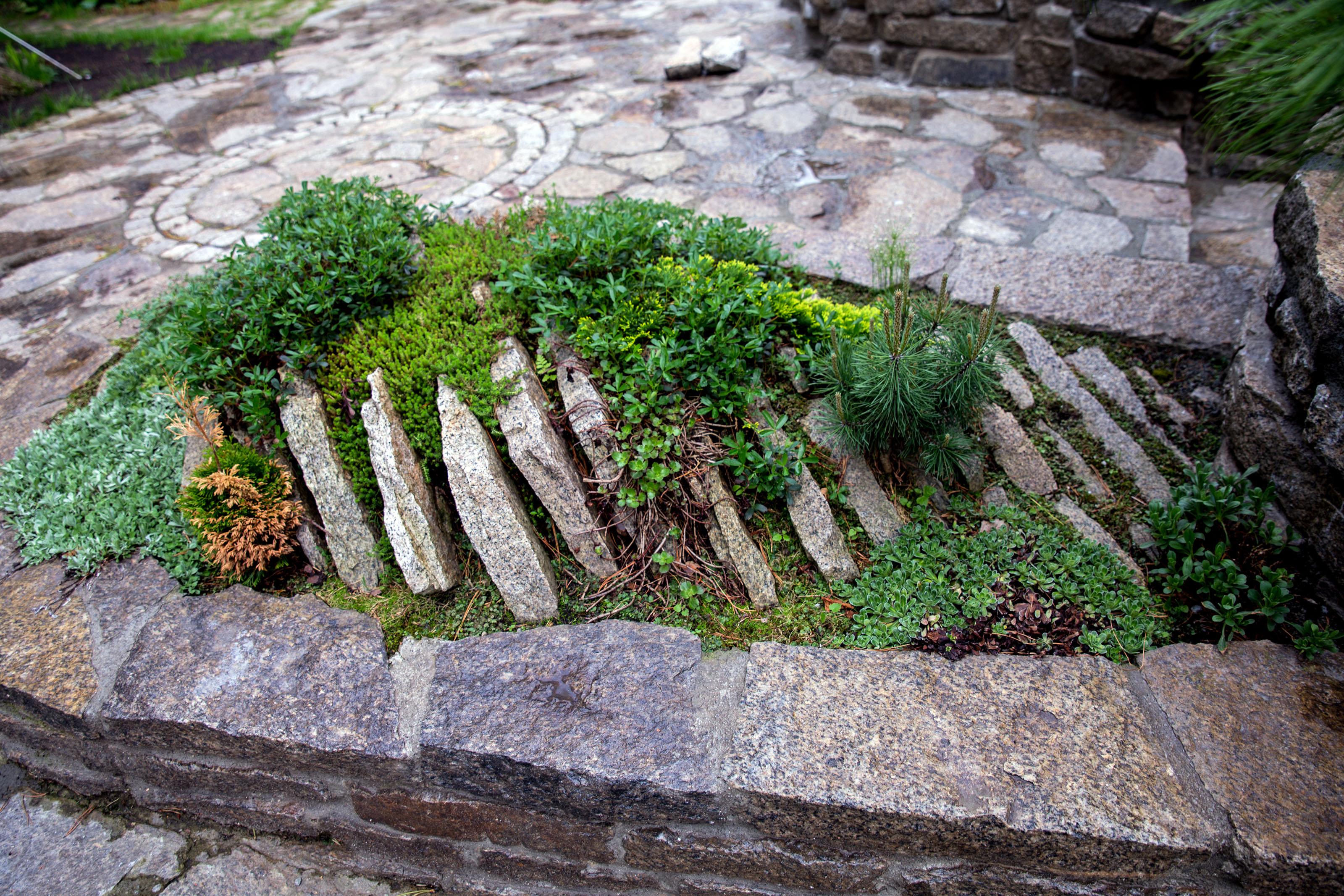 Mini alpinariumas su spygliučiais ir uolėtais akmenimis