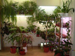 Papildomas augalų ir gėlių apšvietimas