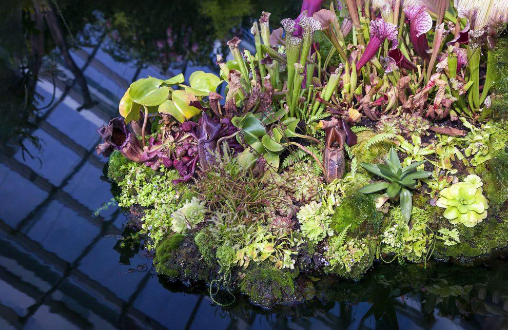 Plėšrūs augalai