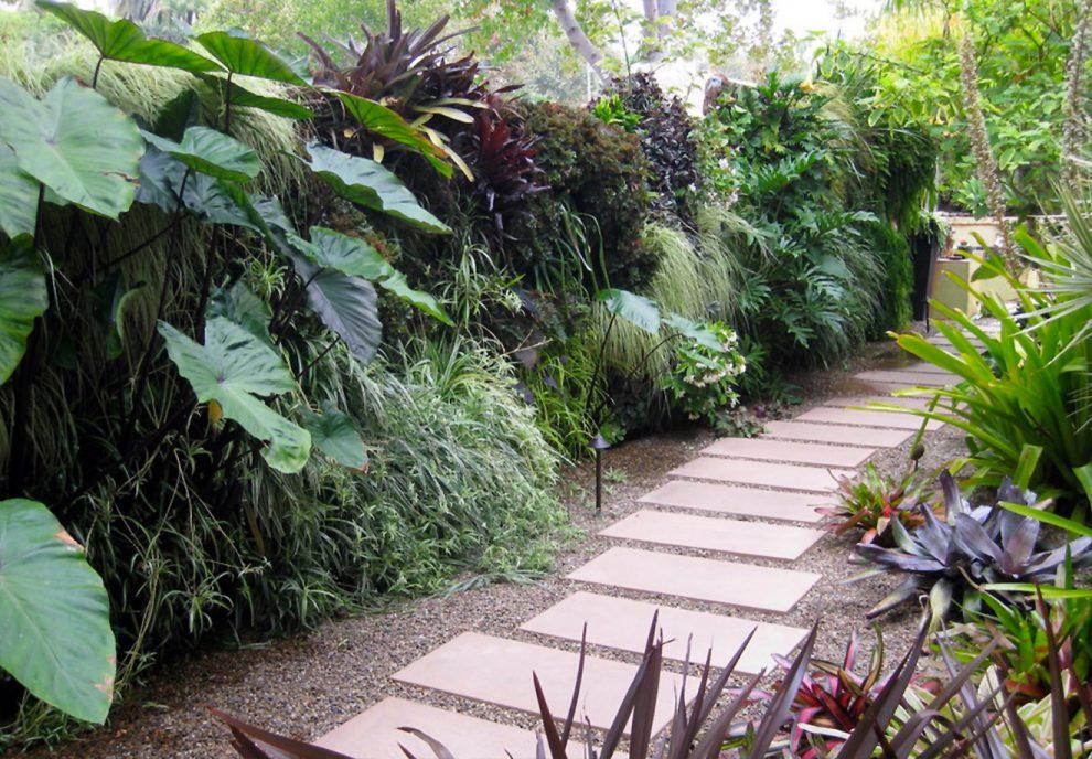 Tropiniai augalai Lietuvoje