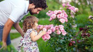 Alergijos nesukeliantys augalai sode