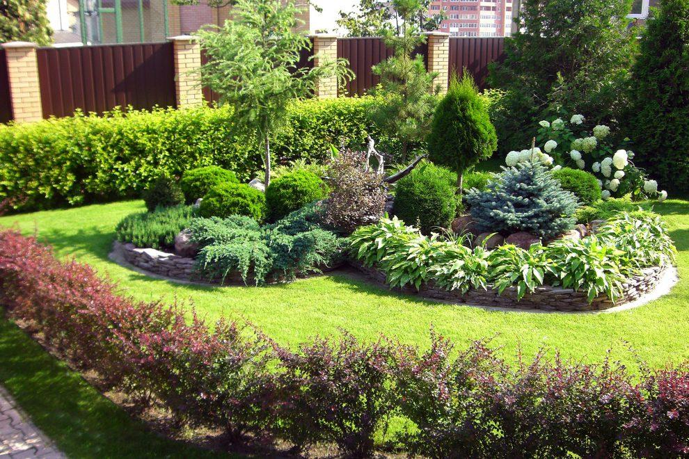 Augalų derinimas sode