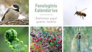 Fenologinis kalendorius sodinimui