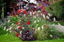 Gėlių derinimas gėlynuose
