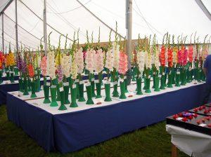 Kardelių paroda