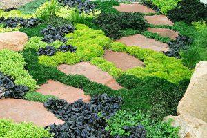 Kiliminiai augalai sodui