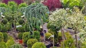 Štambiniai augalai