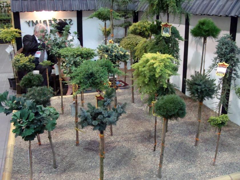 Štambiniai augalai (rūšys)