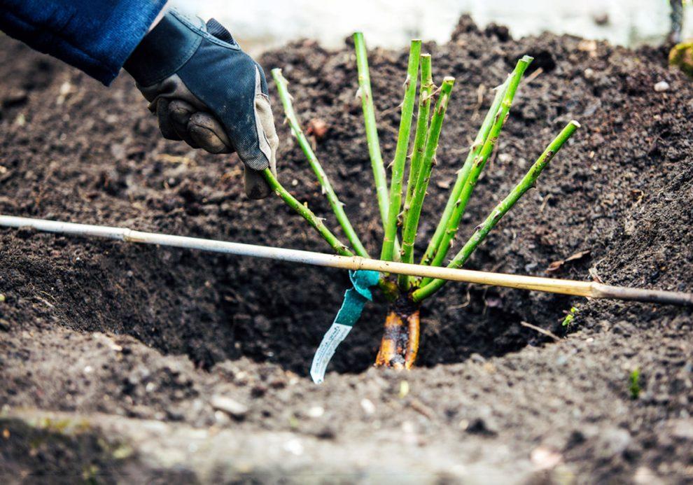 Balandžio mėnesio darbai sode ir darže