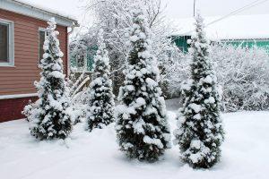Gruodžio mėnesio darbai sode ir darže