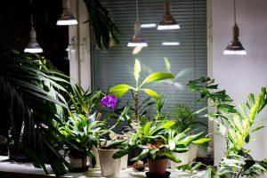 Papildomas augalų apšvetimas