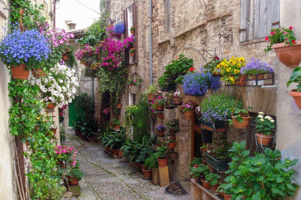 Lauko gėlės vazonuose