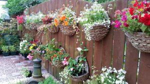 Pakabinamos lauko gėlės