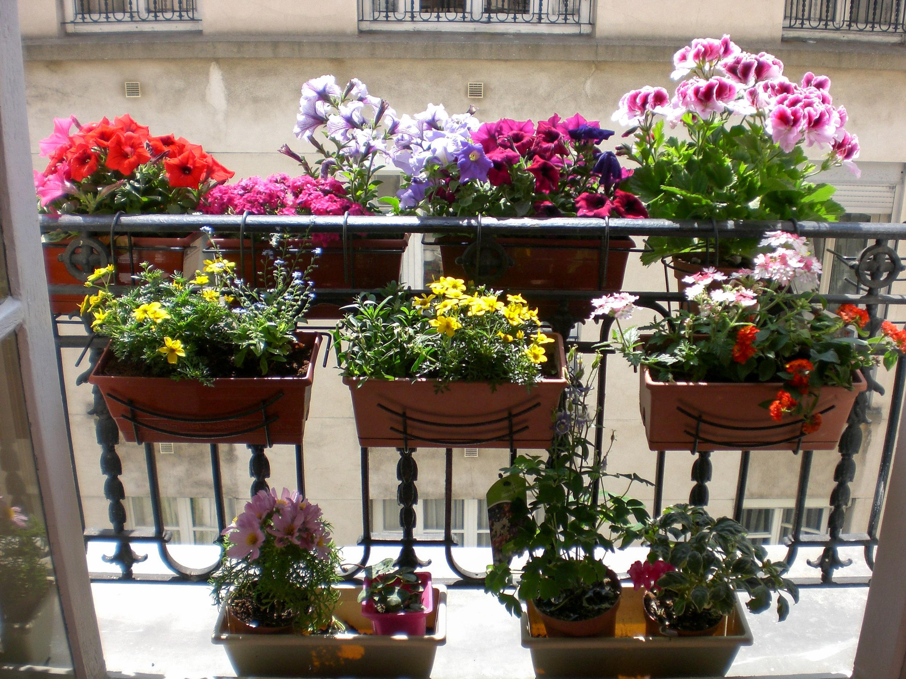 Svyrančios vazoninės gėlės