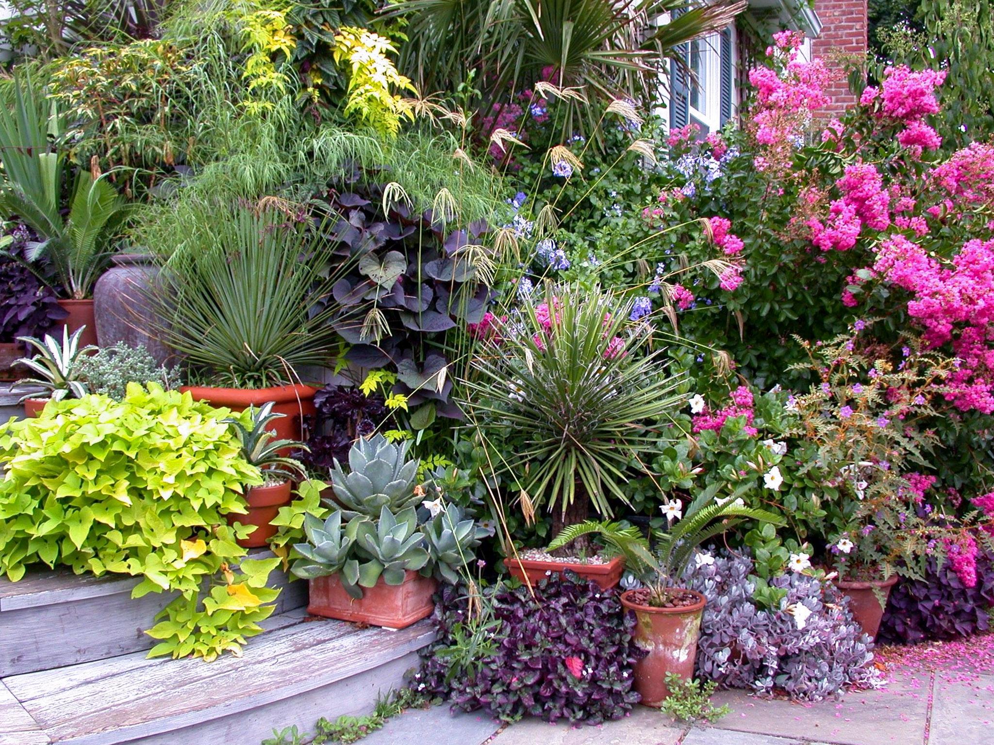 Vazoniniai lauko augalai