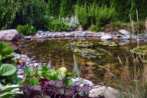 Tvenkinių pakrančių augalai