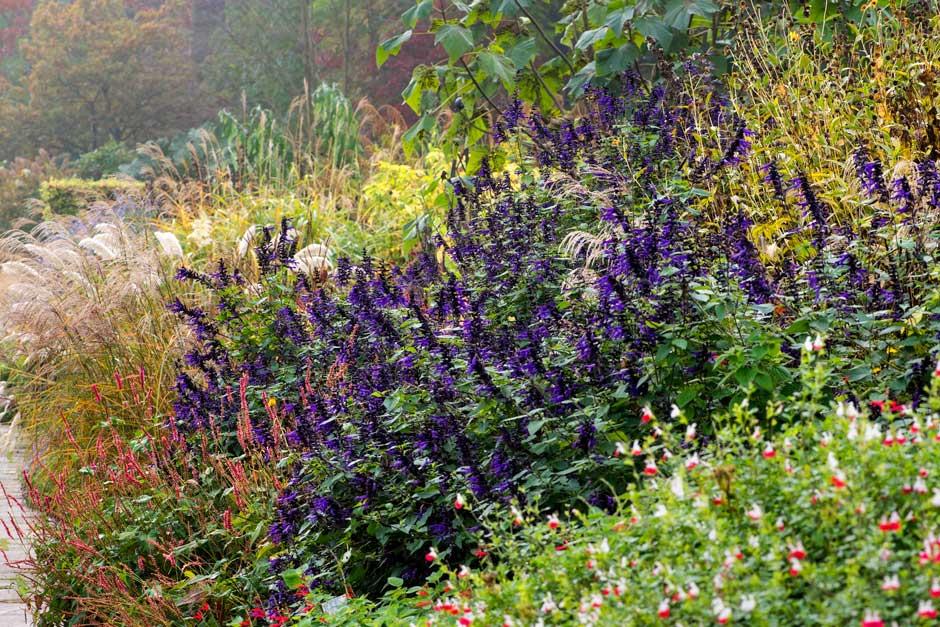 Gėlės kurios žydi rudenį
