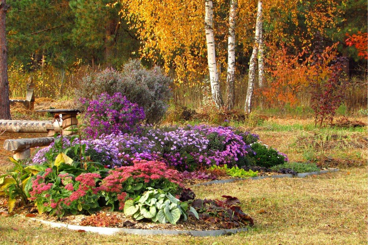 Gėlės pražystančios rudenį