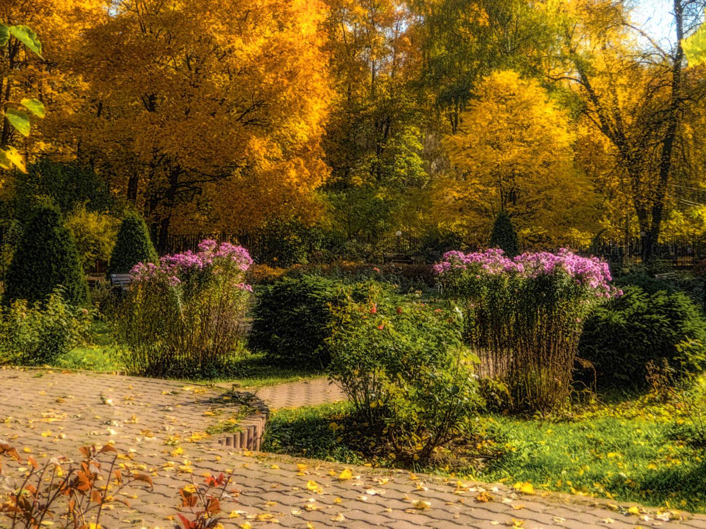 Rudeninės gėlės sode