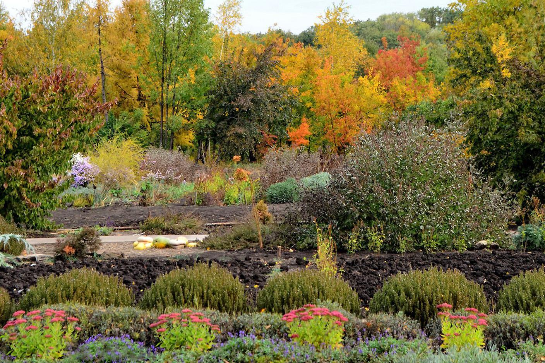 Rudeninių gėlių sodas