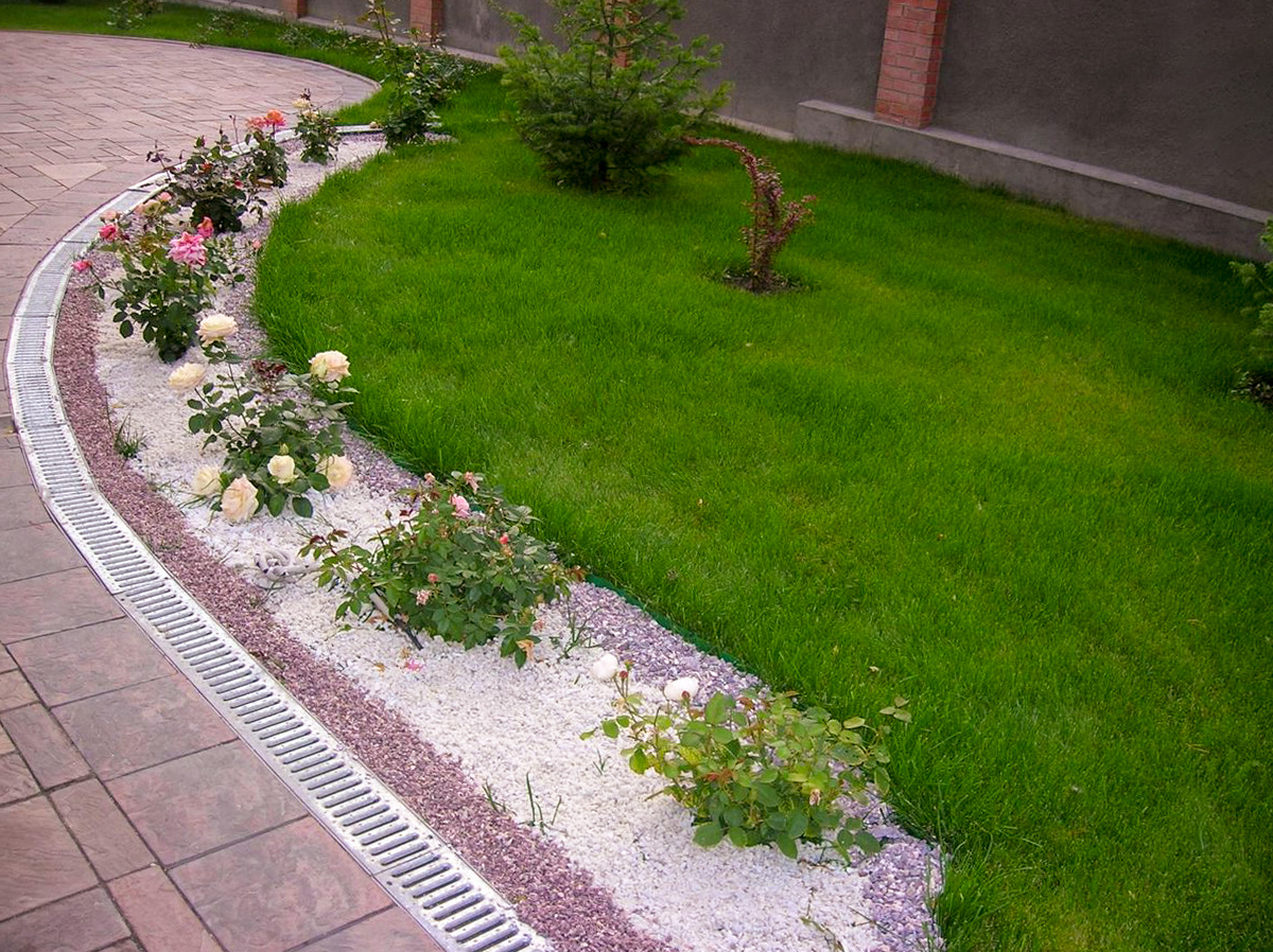 Augalai tarp tvoros ir tako