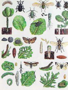 Augalų lapų kenkėjai