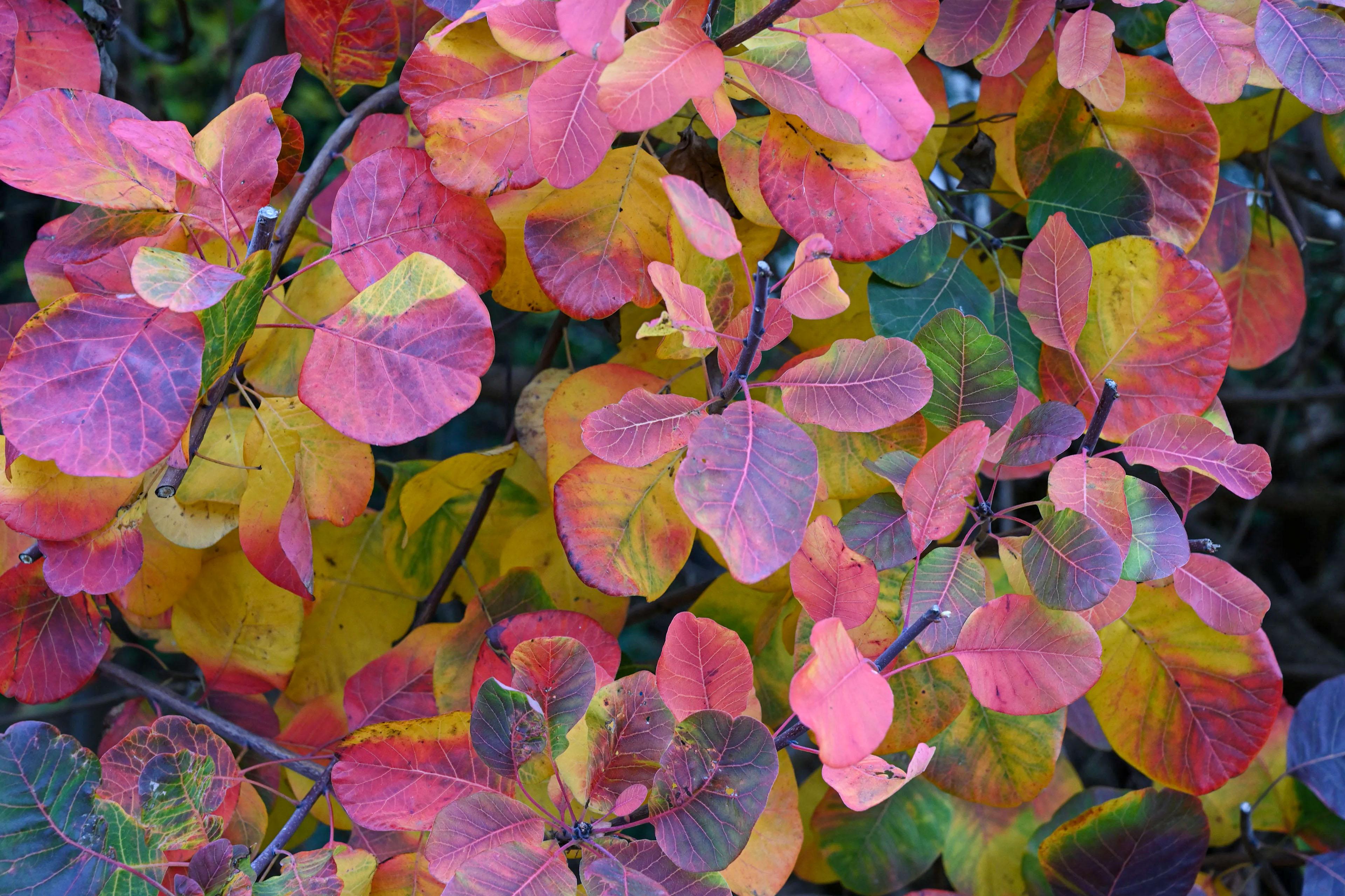 Didysis vokarinis rudenį