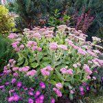 Rudeninių gėlių sodinimas