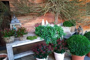 Vazoninių augalų paruošimas žiemai