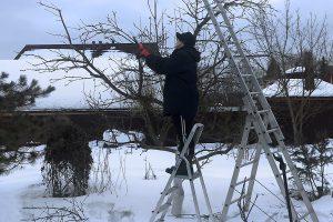 Obelų genėjimas žiemą