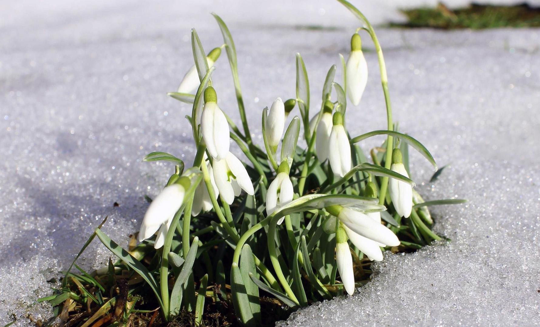 Baltos snieguolės iš sniego