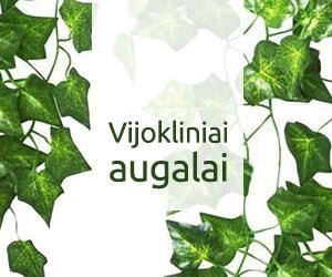 Vijokliniai augalai | Vijokliniai augalai auginami tiek namuose tiek ir lauke, jų rūšys aprašymai ir nuotraukos
