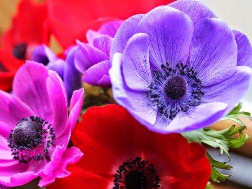 Gėlės nuotrauka. (Pavadinimas: Plukė)