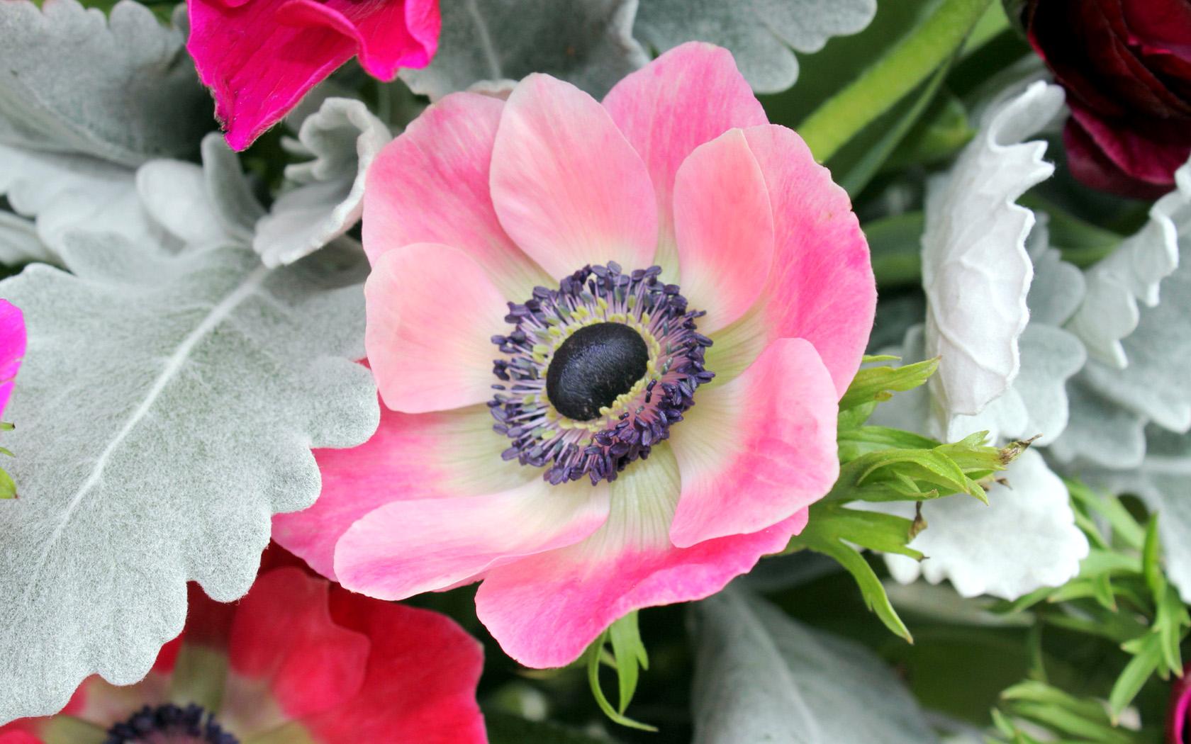 Gėlės Plukės