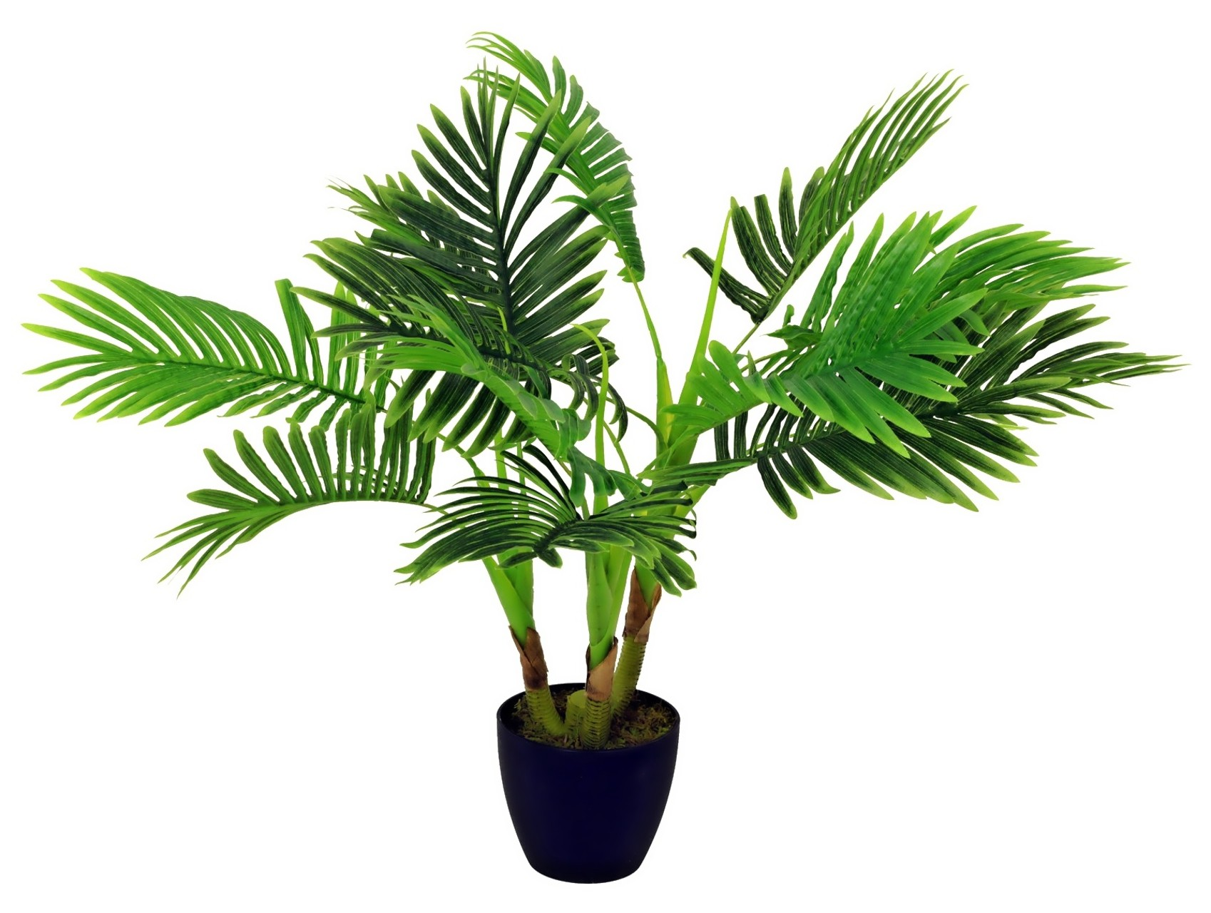 Palmė areka