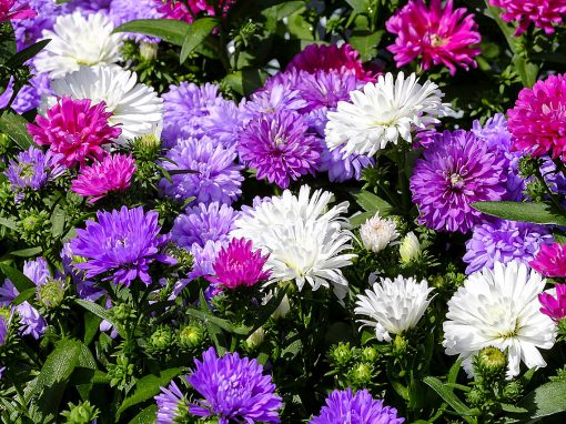 Gėlės nuotrauka. (Pavadinimas: Ratilis)