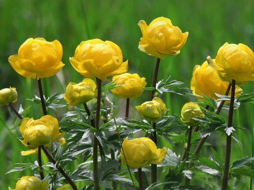 Gėlės nuotrauka. (Pavadinimas: Burbulis)