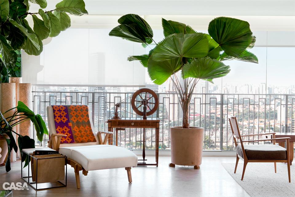 Kambarinė gėlė Likuala (palmė)