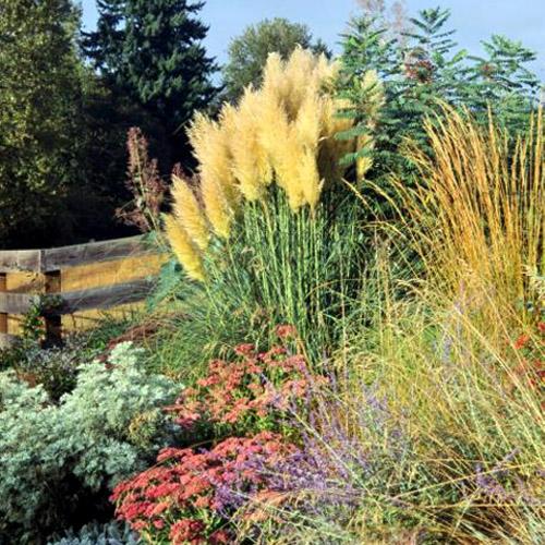 Dekoratyvinės smilgos, žolės, varpiniai augalai