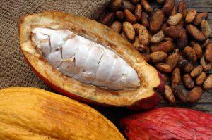 Kakavos medžio vaisiai