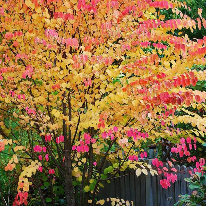 Dekoratyvinis medis spalvotais lapais - Puošmedis
