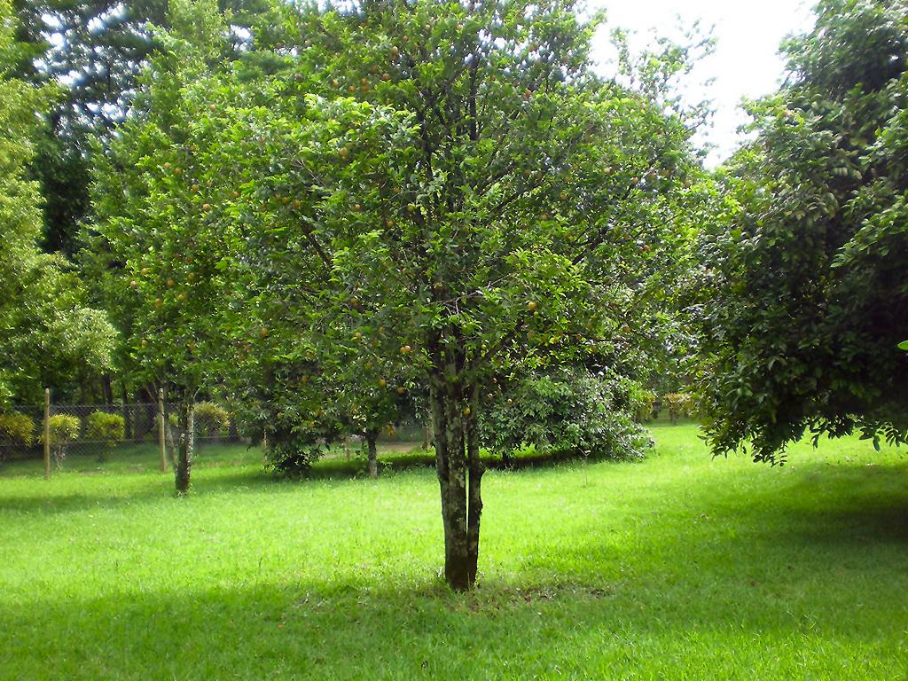 Muskato medis