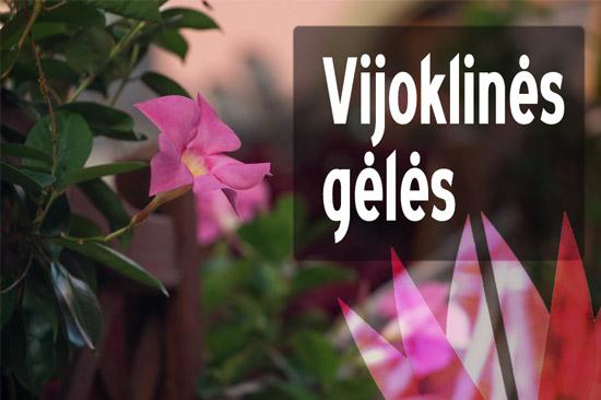 Vijoklinės gėlės