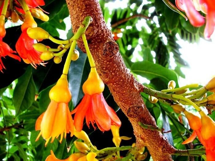 Žydintis medis kaštonpupė