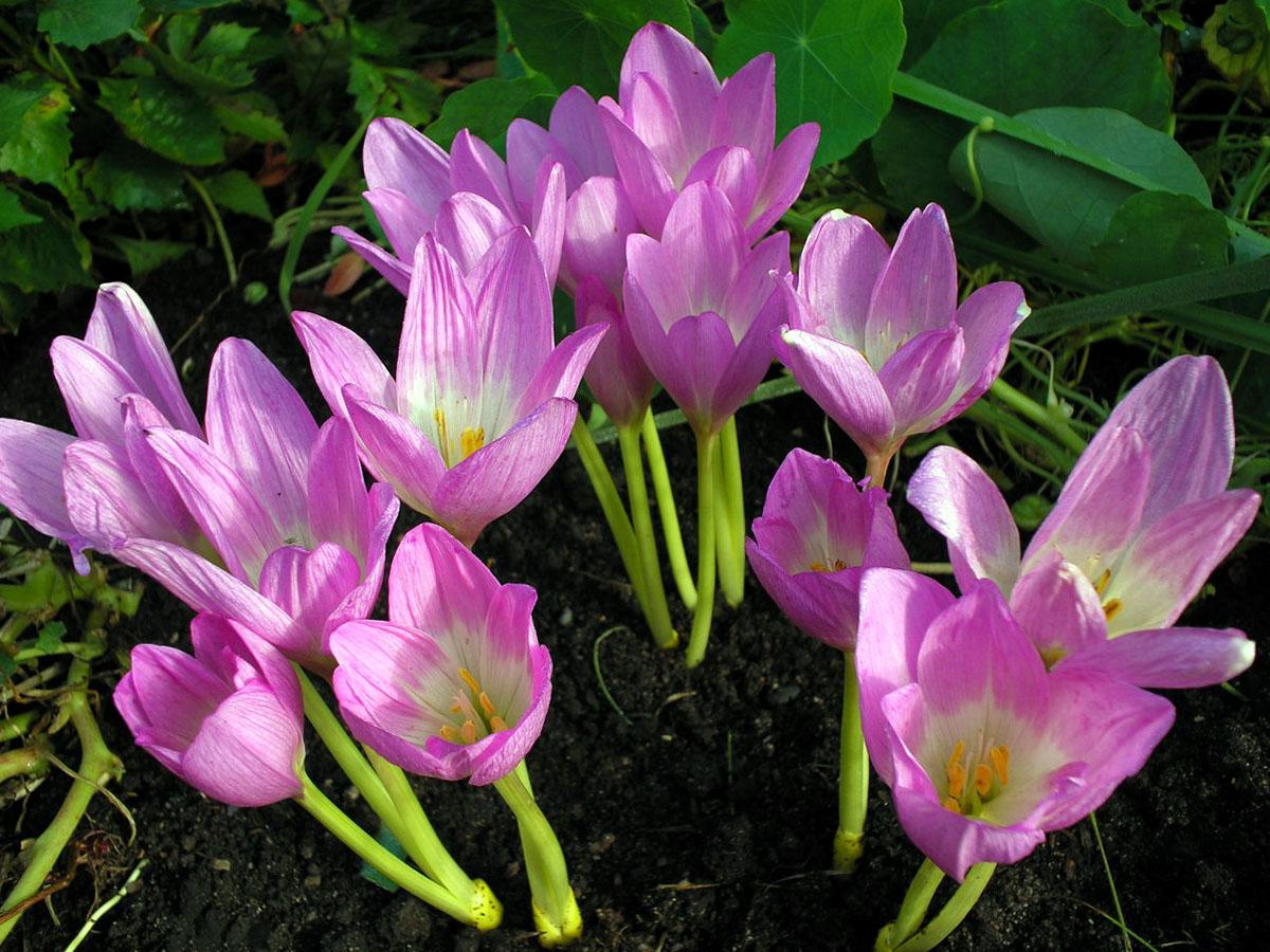 Gėlės vėlyviai